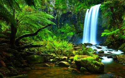 History: The Amazon Jungle | Brazil Environmental Issues