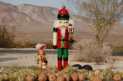 DSC_0013 Nutcrackers in the desert