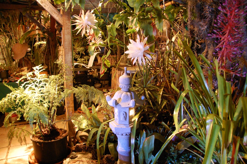 DSC_0487 Cereus & outdoor kitchen