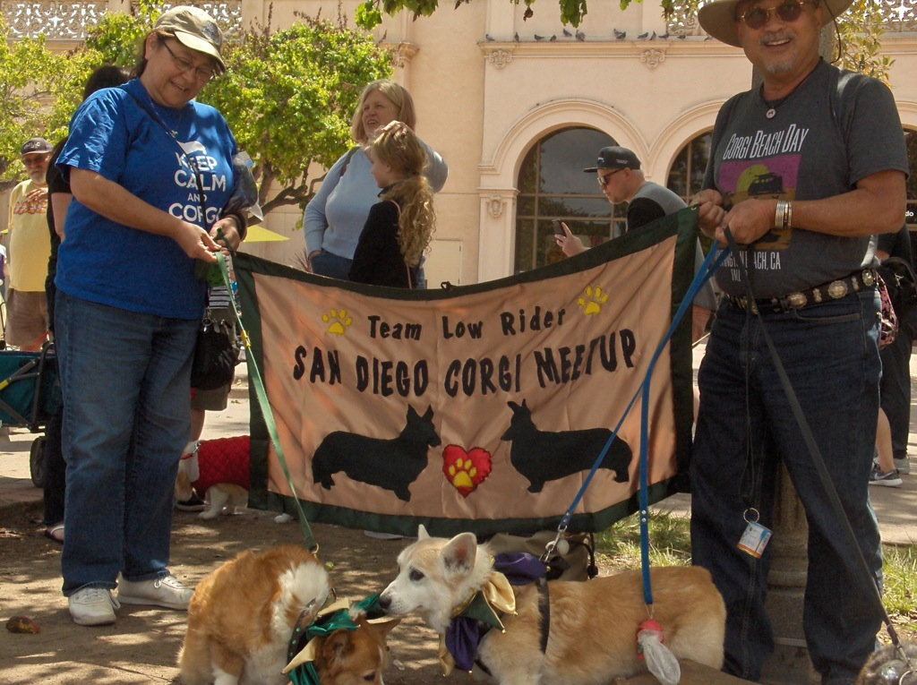 HPIM3061 Banner's debut at corgi meetup