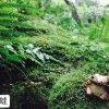 祇王寺の苔の楽園、蛙の置物を連れて