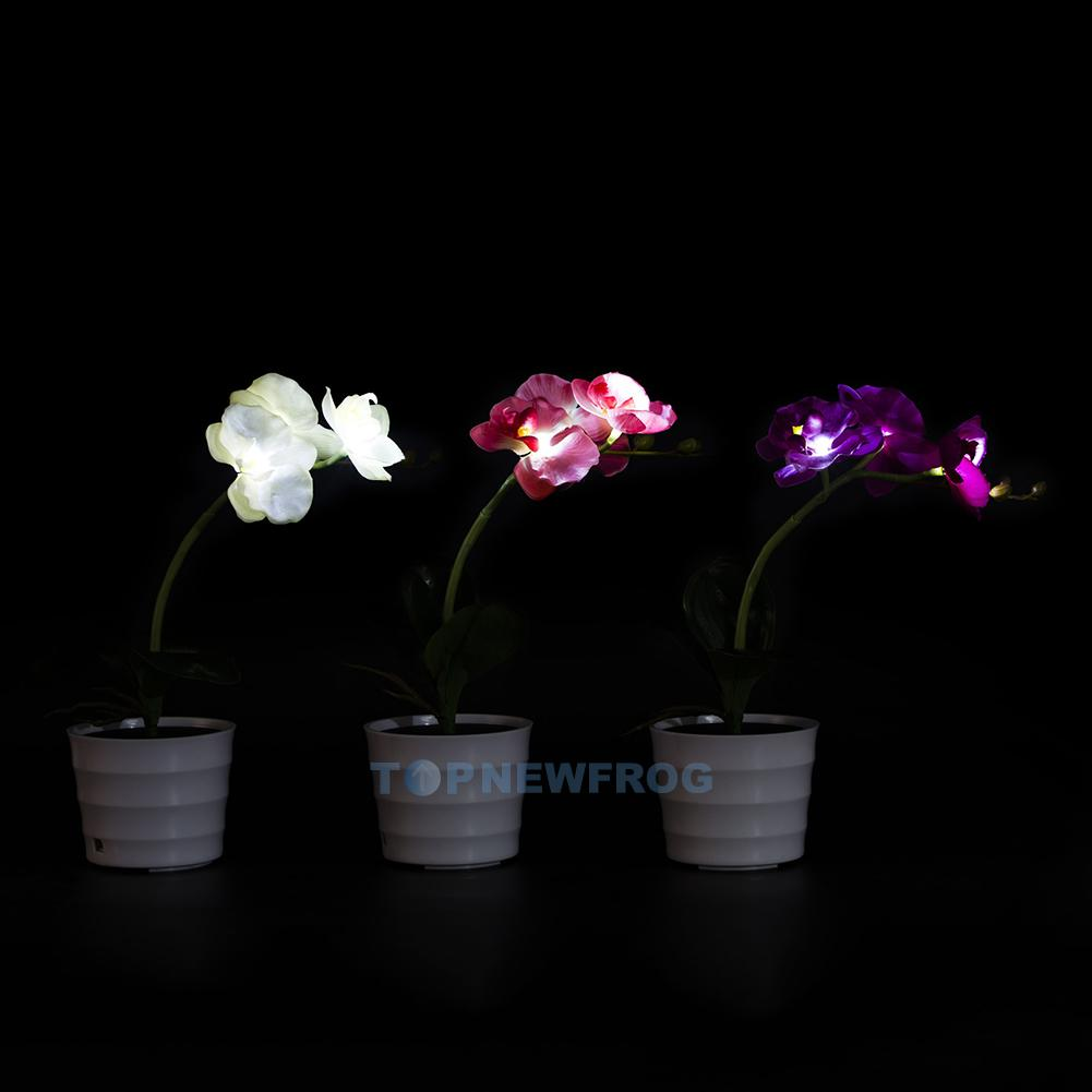 Led Zimmerbeleuchtung Nice Orchideen Beleuchtung Images Gallery Led Orchidee
