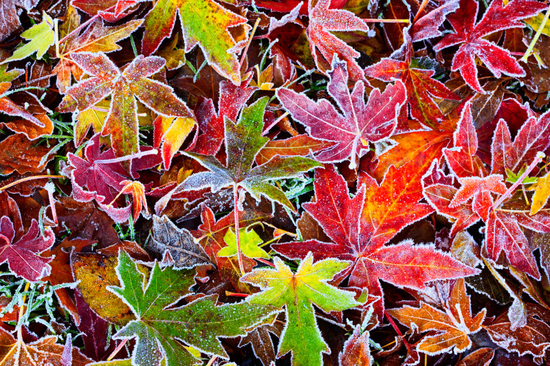 Frosty Fall Leaves Wallpaper October 2011 Professional Frameworks 1 Photography