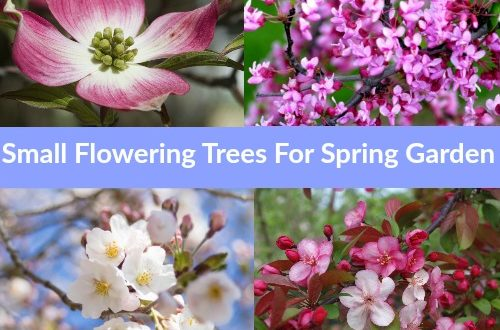 Top 10 Small Flowering Trees That Offer Wonderful Spring Blooms