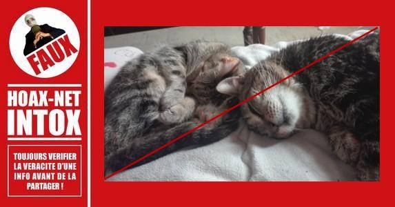 Non, le maire de Sommedieue ne veut pas euthanasier tous les chats de son village