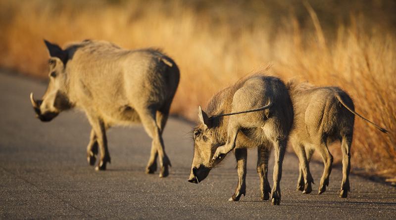 2011_07_28_Kruger_National_Park_13581.jpg