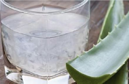 Why is Aloe Vera The Plant of Immortality?