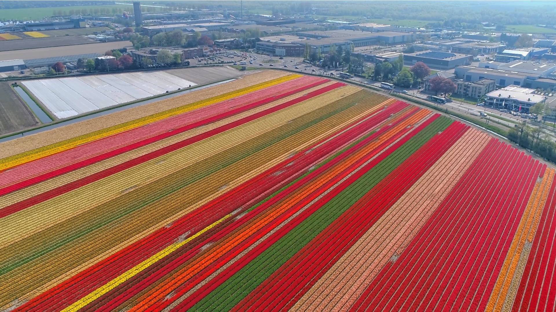 Cycling The Tulip Fields Holland Bike Tours