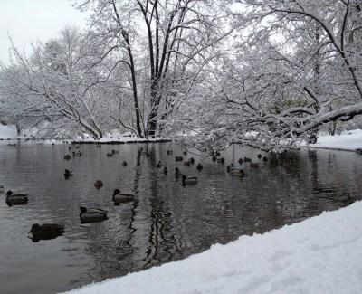 Duck pond, Stadtpark
