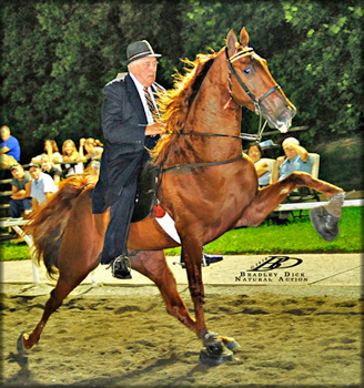 Holmes Farm - Missouri Breeders of Tennessee Walking Horses - For Sale SAFE!!!