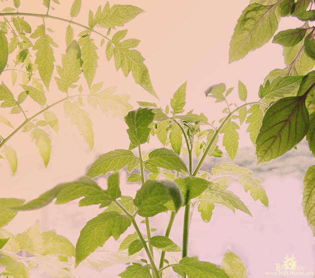 plants_883