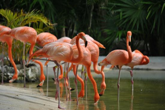 fort lauderdale flamingos