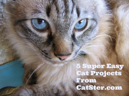 super-easy-cat-projects