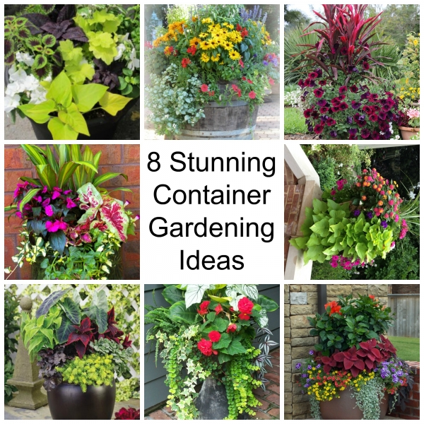 8 stunning container gardening ideas home and garden for Home and garden garden plans