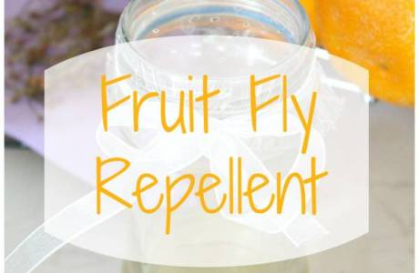 Fruit-fly-control