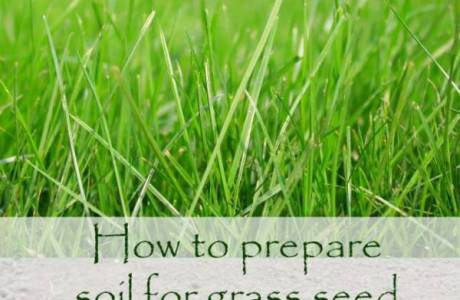 The Right Way to Prepare Your Soil to Plant Grass Seed