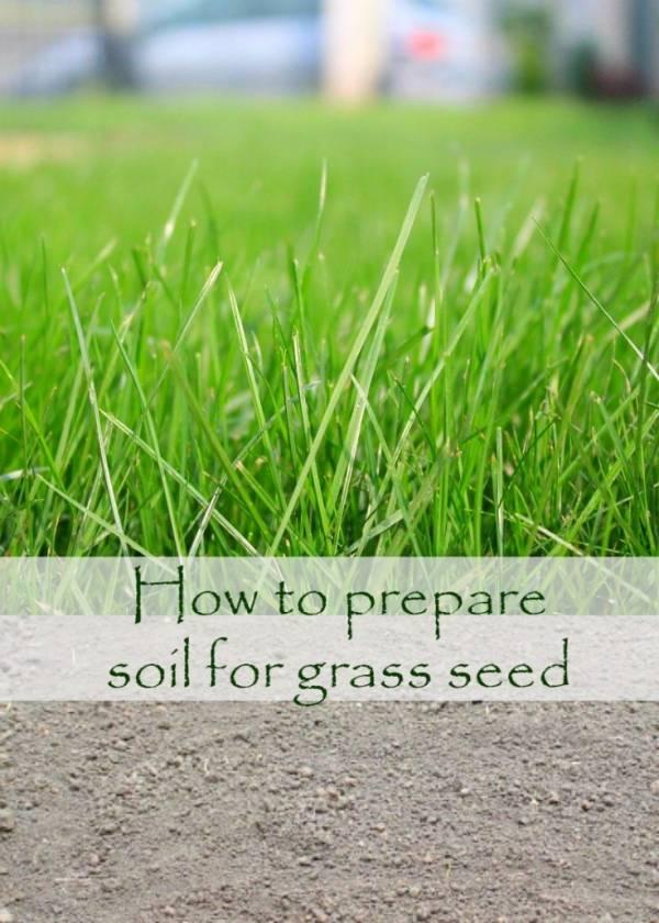 grassseed