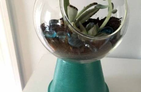 Gumball Machine Terrarium