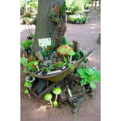 Small Crop Of Miniature Trees For Fairy Gardens