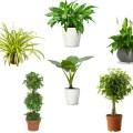 airpurifyingplants