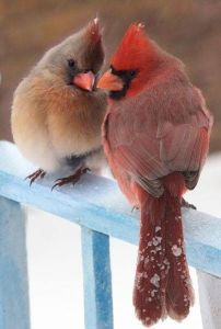 Colorful Birds In Love