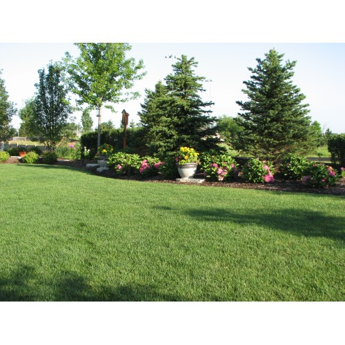 Medium Crop Of Images Of Backyard Landscaping