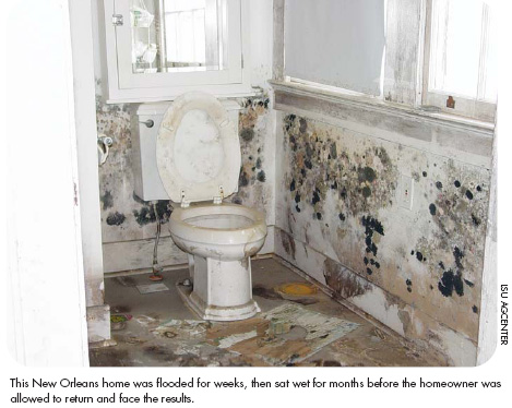 Home Energy Magazine :: Dealing With Mold In Damaged Homes