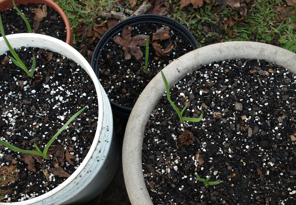 How To Recycle Potting Soil
