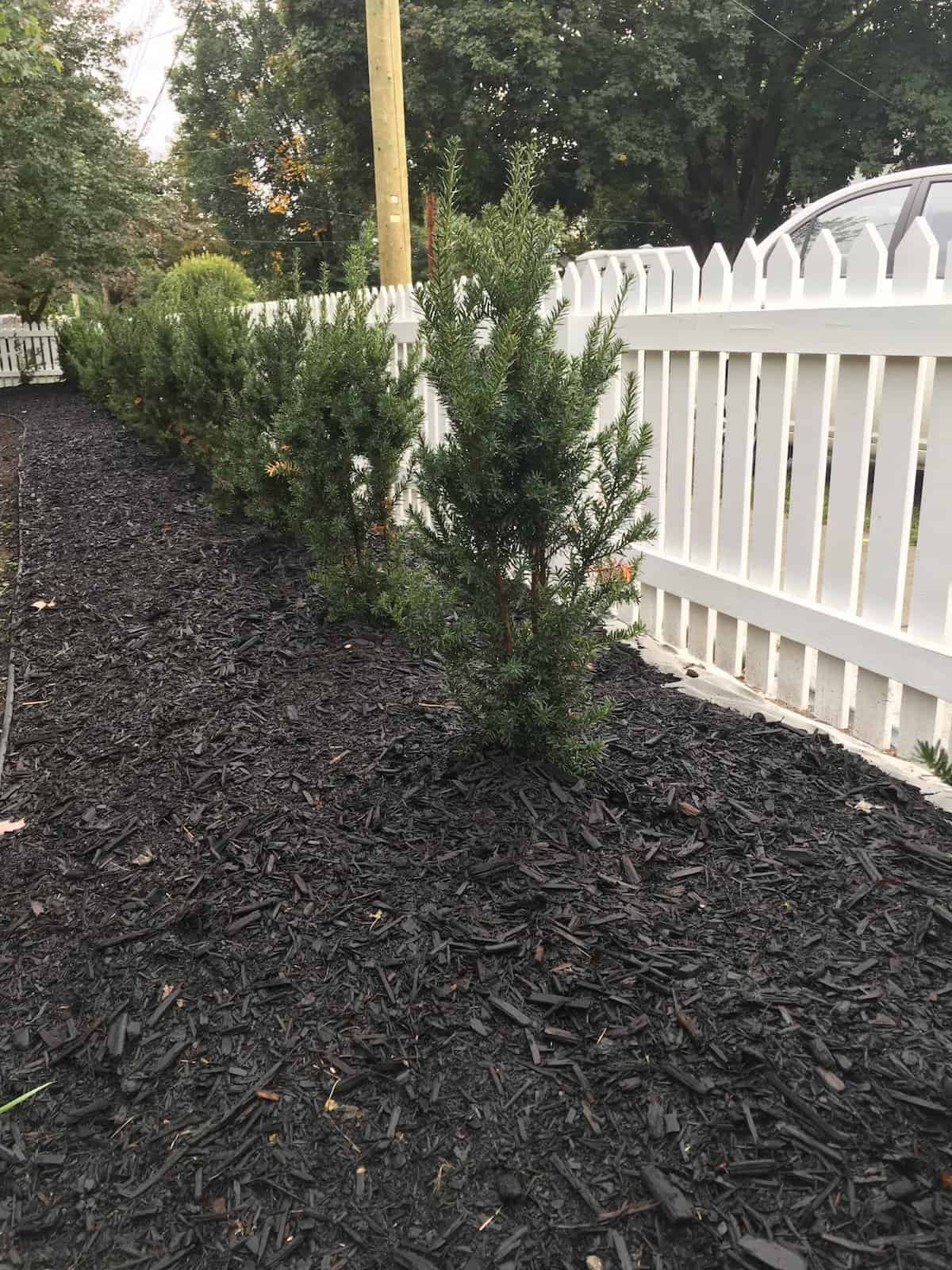 Black Bark Mulch Mulch All About Mulching Your Garden Home For The Harvest