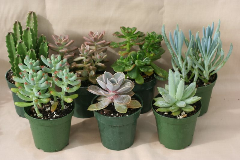 The Craze In Growing Succulents – Homegardeningph