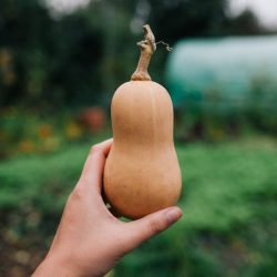 Small Of When To Harvest Butternut Squash