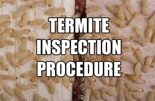 Termite Inspection Service Cost & DIY Procedure