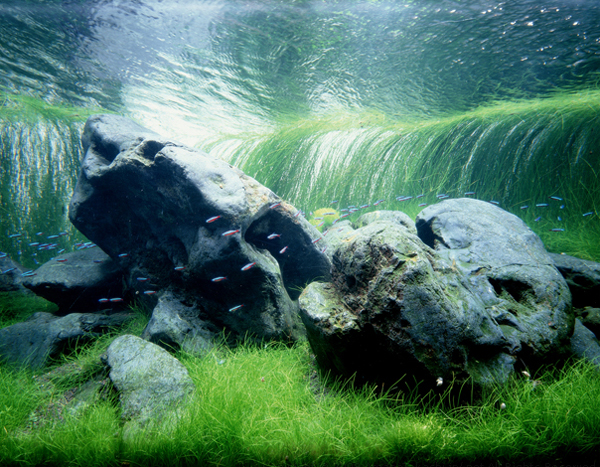 Plants For Japanese Style Garden Nature Aquariums From Takashi Amano | Home Design And Interior