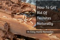 How To Get Rid Of Termites Naturally: 14 Easy Home Remedies