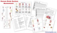 Human Body Worksheets: Cells, Tissues, Organs, and the ...