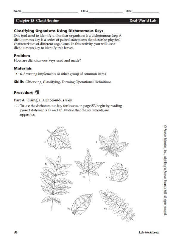 Dichotomous Key Template pdf school supplies classification ...
