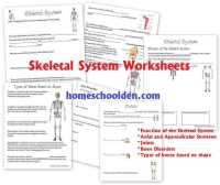 The Skeletal System Worksheet | Homeschooldressage.com