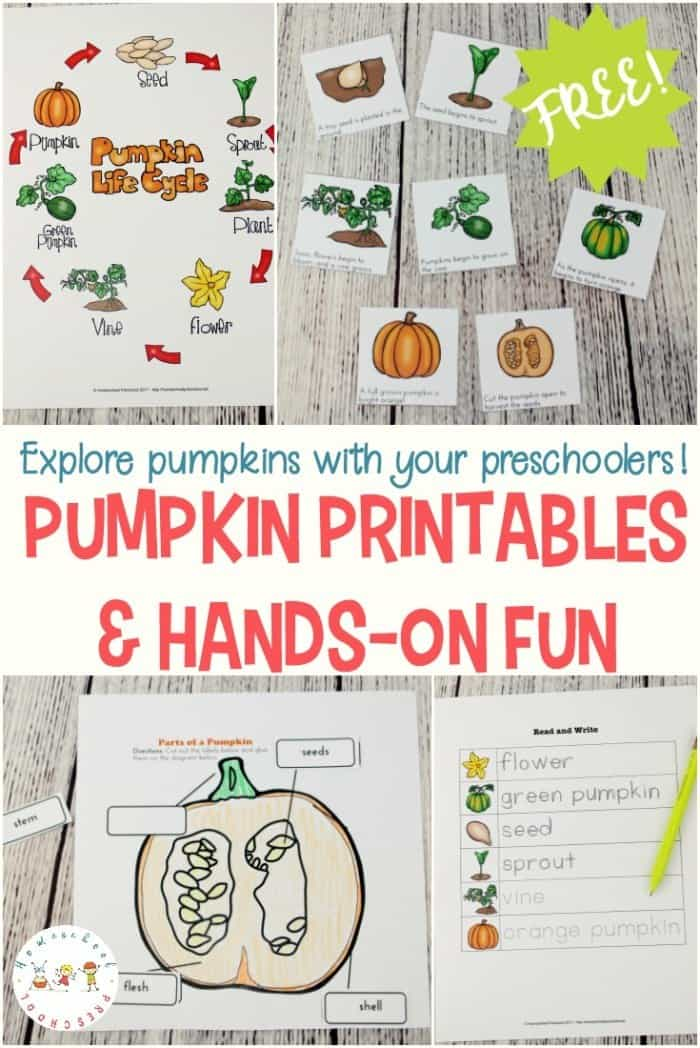 Free Life Cycle of a Pumpkin Printables - Homeschool Giveaways