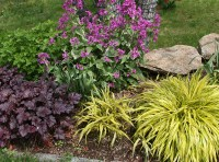 Perennial Zone 7 that will Adorn Your Beautiful Garden ...