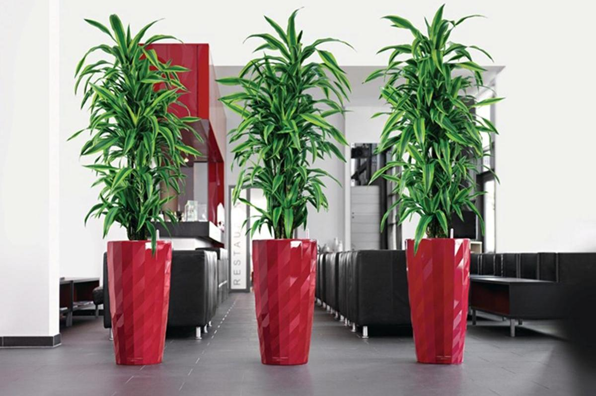 Tall Indoor Plants With Big Leaves Tall House Plants For Indoor The Most Recommended Ones