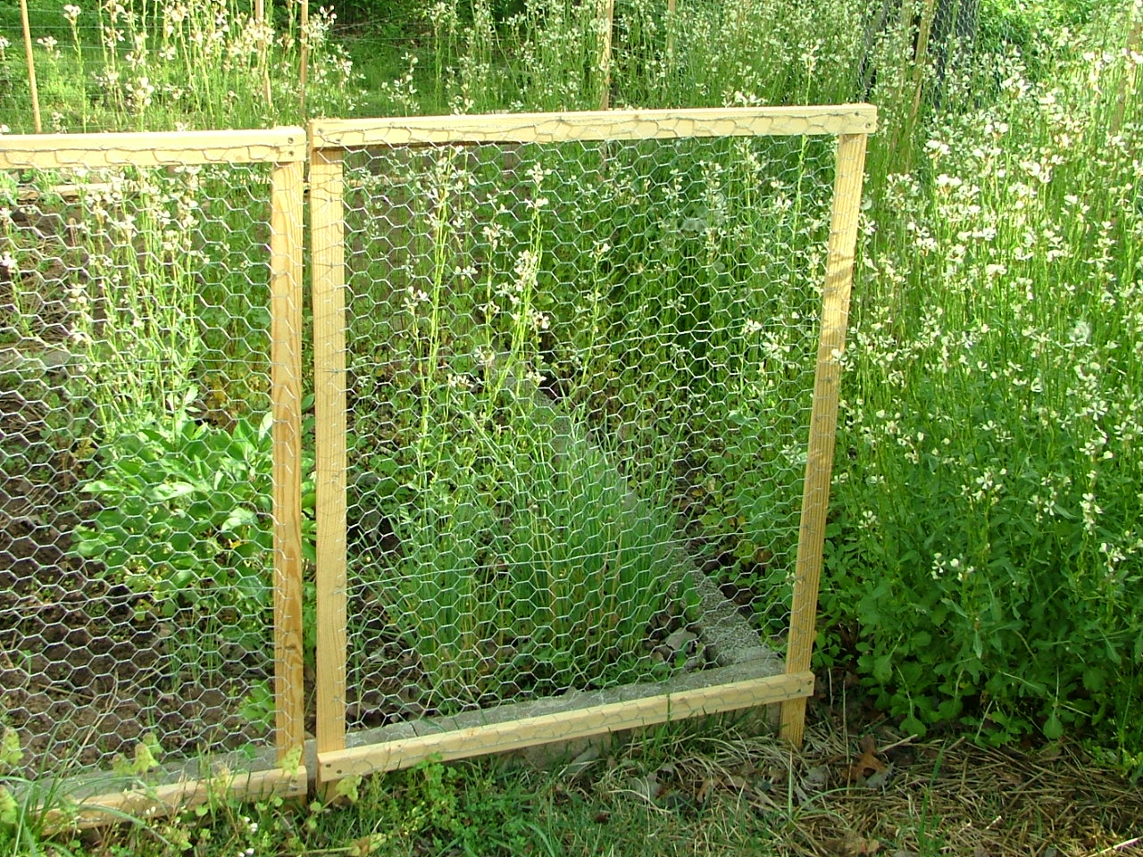 Framed chicken wire fence homestead annie s pics