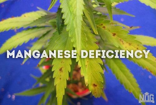 marijuana manganese deficiency