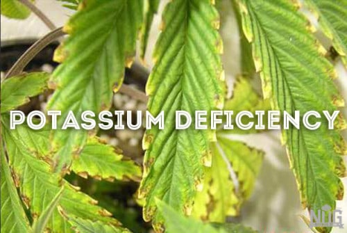 marijuana potassium deficiency