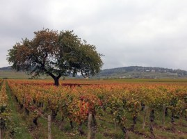 design-travel-vineyard-tree