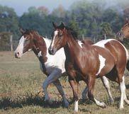 horsesl