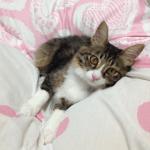 猫への暖房設備はなにが安全??適温はどれくらい?必要ですか?