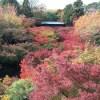 東福寺の紅葉時期と混雑はいつ?合わせて行きたい観光スポット