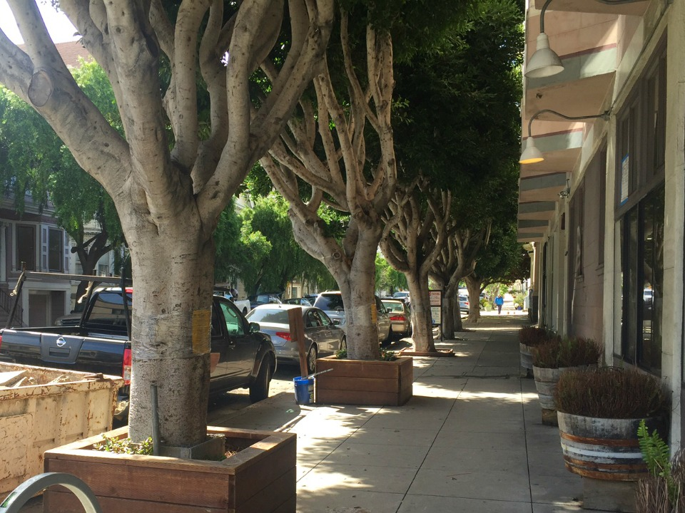 7 Ficus Trees Slated For Removal Outside Former Bean There