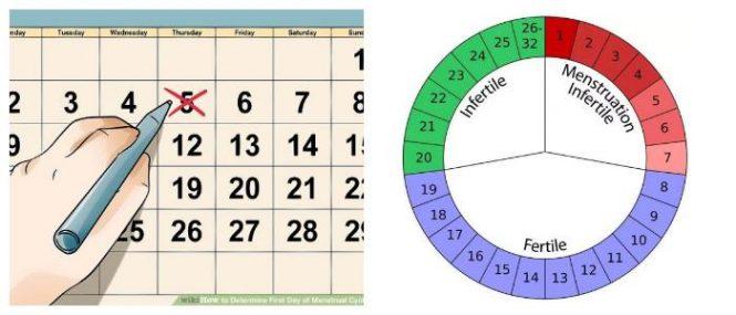 Explanation Menstrual Cycle Calendar \u2013 Hoool