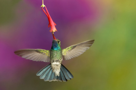 Fall Colors Wallpaper Background Hummingbird Photography How Many Electronic Flashes